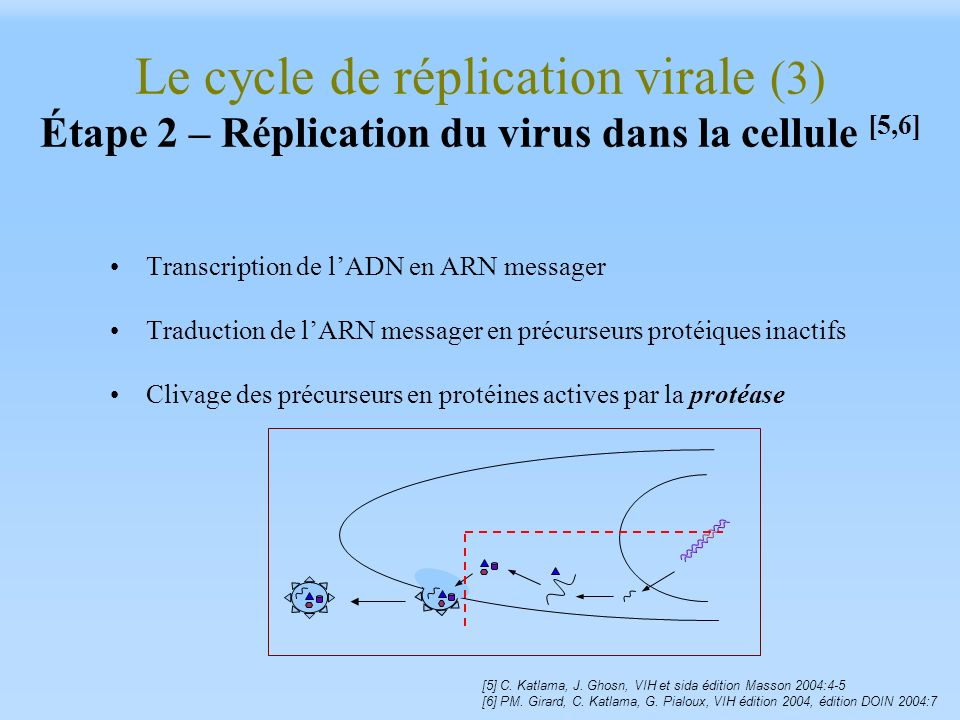 Le cycle de réplication virale (3) Étape 2 – Réplication du virus dans la cellule [5,6]
